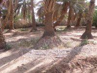 2009_palmeraie04